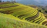 Yên Bái s'apprête à accueillir la Semaine de la culture et du tourisme de Muong Lo