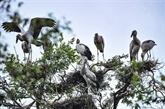 Développer lécotourisme dans le Parc national de Tràm Chim