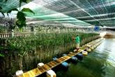 Vietnam - Japon : Hô Chi Minh-Ville et Aomori coopèrent dans lagriculture high-technbsp
