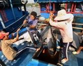 Publication dun Livre Blanc sur la pêche INN au Vietnam