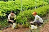 Hausse de 6,6% de la valeur de production forestière