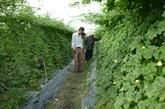Renforcer le développement des zones agricoles hi-tech dans les régions périphériques