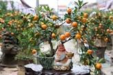 Les Vietnamiens préparent leurs bonsaïs pour la fête du Têt