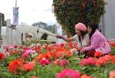 Dà Lat : plus de 60.000 visiteurs à lexposition de fleurs et de plantes dagrément