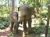 L'histoire de deux éléphanteaux orphelins
