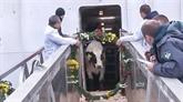 Le groupe TH importe des vaches laitières américaines en Russie