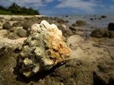 La fréquence du blanchissement des récifs coralliens s'accélère