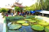 Phuoc Kiên, la pagode abritant une sorte de lotus géant dans le delta du Mékong