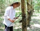Des produits en bois d'hévéa du Vietnam présents dans plus de 100 pays et territoires
