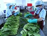 Coopérative: passerelle entre agriculteurs et entreprises