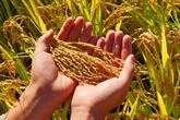 FAO: initiative faim zéro dans le monde d'ici 2030
