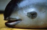 Mexique: six spécimens d'une espèce au bord de l'extinction repérés