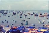 Binh Thuân devient l'une des plus grandes pêcheries du pays