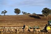 L'Australie crée un fonds pour mieux anticiper les futures sécheresses