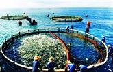 Vietnam - Norvège: partage des expériences dans l'aquaculture