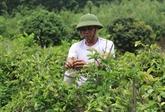 Nécessité de développer la culture des plantes médicinales