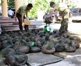 Progrès du Vietnam dans la lutte contre la criminalité liée aux espèces sauvages