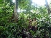 Vietnam et Laos accroissent leur coopération dans l'application de la législation forestière