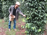 Démarches pour défendre la propriété intellectuelle sur les produits agricoles