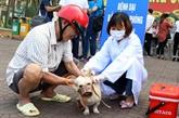 Journée mondiale contre la rage célébrée à Lào Cai