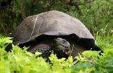 Équateur: mystérieux vol de 123 tortues aux Galapagos