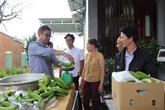 Lâm Dông: les bananes Laba exportées au Japon