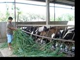 L'agriculture de Hô Chi Minh-Ville a atteint une croissance de 6,2%