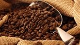 Les exportations de café établissent un record