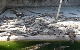 Élaboration de marques pour augmenter les exportations de crocodiles