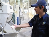 L'exportation du riz vietnamien s'élève à cinq millions de tonnes