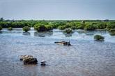 Delta du Mékong: planifier l'espace maritime et améliorer l'écosystème côtier