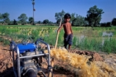 La BAD aide à améliorer les systèmes d'irrigation du Vietnam