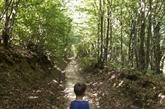 Les zones forestières augmentent dans la région Méditerranée