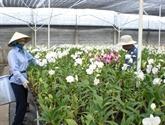 Orchidées et bonsaïs feront leurs festivals à Hô Chi Minh-Ville