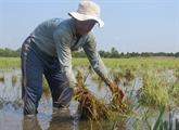 La résilience aux changements climatiques au centre des débats à Hanoï