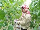 Hanoï souhaite coopérer avec Israël dans l'agriculture de haute technologie