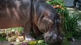 Burundi: au moins 20 personnes tuées par des hippopotames en 2018