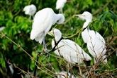 Le jardin de Bang Lang, le berceau des échassiers