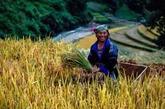 Six millions de personnes sorties de la pauvreté au Vietnam