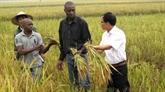Renforcement des relations de la coopération entre le Vietnam et l'Afrique