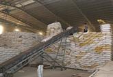 L'exportation de riz prévoit d'atteindre plus de 3,15 milliards de dollars