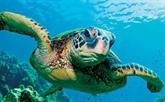Sensibilisation de la communauté à la conservation des tortues marines