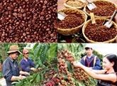 Les PPP sont invités à développer durablement le secteur du café