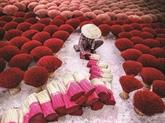 Lhomme qui raconte le Vietnam en images