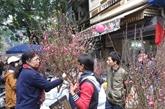 Hàng Luoc, marché aux fleurs du printemps