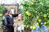 Des spécialités de Hanoï animent le Têt du Chien