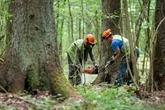 Forêt de Bialowieza : la Pologne a enfreint la loi européenne