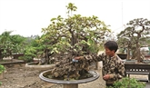 Visite de l'ancien village de bonsaï de Triêu Khuc