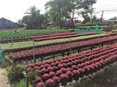 Découverte du village horticole de Tân Quy Dông