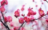 Accueillons le nouveau printemps